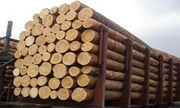 Ռուսաստանը վերացրել է Վերին Լարսով Հայաստան փայտանյութի մատակարարման խոչընդոտը